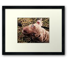 Blue eyed beauty Framed Print