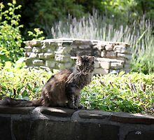 Thai in the Garden by Lynn Starner
