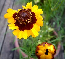 Gold and burgundy flower by dharmadogstudio
