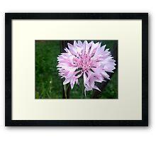 Delicate light pink flower Framed Print