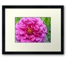 Big Pink Flower Framed Print