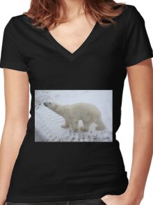 Inquisitive Polar Bear Women's Fitted V-Neck T-Shirt
