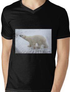 Inquisitive Polar Bear Mens V-Neck T-Shirt