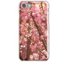Cherry Blossoms of Late Spring iPhone Case/Skin