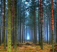 Pine Forest in Morning Fog. by eXparte-se