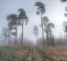 Forest Track in Mist. by eXparte-se
