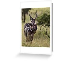 Symmetry Greeting Card