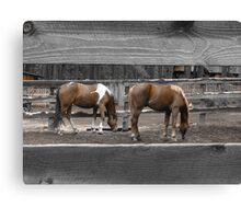 Grazing in Color Canvas Print