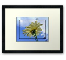 DAISY Reaching for the Sky !!! Framed Print