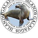 Galapagos Islands Sea Lion by Zehda