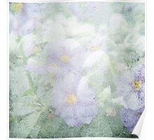 Faded Lilac Flowers Poster
