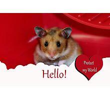 Animal Welfare Photographic Print