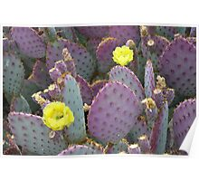 Prickly Pear Cactus - Arizona Poster