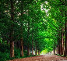 Damyang Metasequoia by aaronchoi