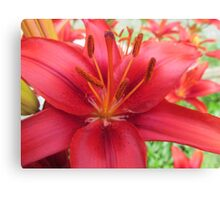 Red Unknown Flower Canvas Print