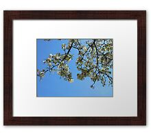Blossoms in the Sky Framed Print