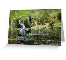 The Ibis Ignore the High Drama at the Pond Greeting Card