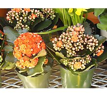 Two Orange Potted Plants Photographic Print