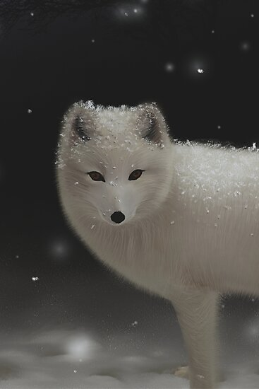 Arctic Fox by alice9
