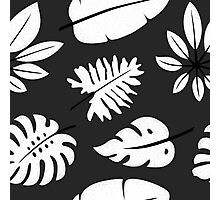 Monochrome pattern with tropical leaves Photographic Print