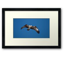 Osprey - On the look out for a meal Framed Print