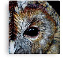 Tawny Owl in Coloured Pencil Canvas Print