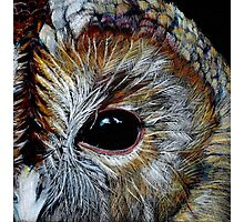 Tawny Owl in Coloured Pencil Photographic Print