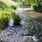 Trickling Stream by bradleyduncan