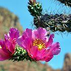 Cactus Flower by bradleyduncan