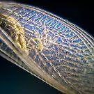 Wings by Steven  Sandner