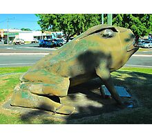 The Big Cane Toad Photographic Print