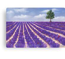 Lavender Season Canvas Print