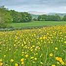 Buttercups and Ingleborough by Stephen Knowles