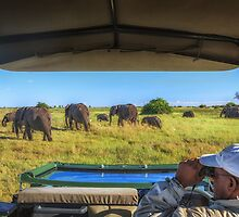 Beyond Elephant Watching by Owed To Nature
