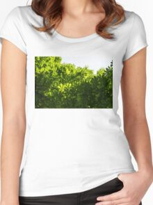 More Than Fifty Shades Of Green - Sunlit Chestnut Leaves Patterns - Up Women's Fitted Scoop T-Shirt