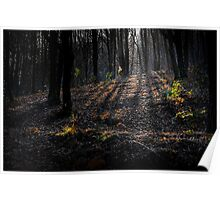 Shadowy forest Poster