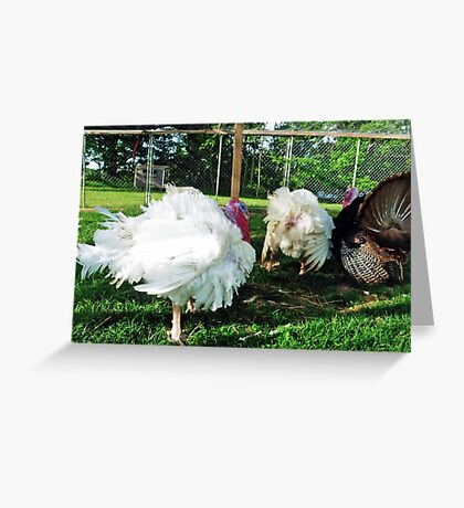 Pardoned by the White House Greeting Card