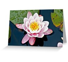 Water Lily (2) Greeting Card