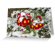 Red Winter flowers in the snow Greeting Card