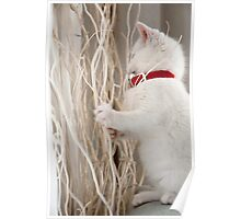 Kitten (Odin) with Twigs  Poster