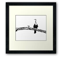 High Key Anhinga Framed Print