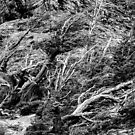 Windswept Woodland Mono by Dave Hare