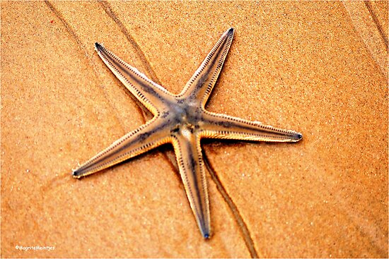 """""""PERFECT CREATION"""" - starfish in mozmbique by Magaret Meintjes"""