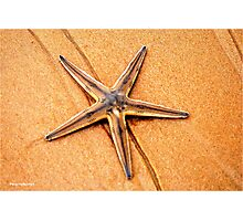 """PERFECT CREATION"" - starfish in mozmbique Photographic Print"