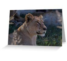 Beautiful Lioness Greeting Card