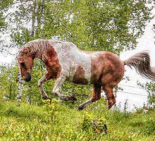 Palomino Paint Horse on the run. by Val  Brackenridge