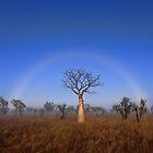 Fogbow Boab Tree by Rod Hartvigsen
