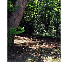 Mystical Forest Photographic Print