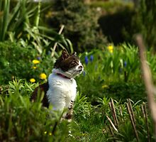 Tabby cat in garden with flowers by turniptowers