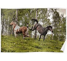 Percheron and Palomino Horses having a disagreement. Poster